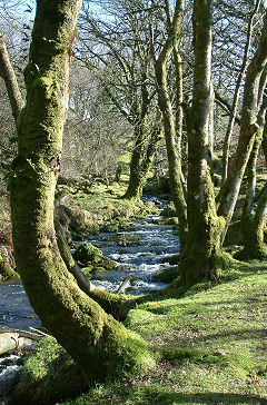 Near Nosworthy Bridge, from Michael Parle's photos of Dartmoor